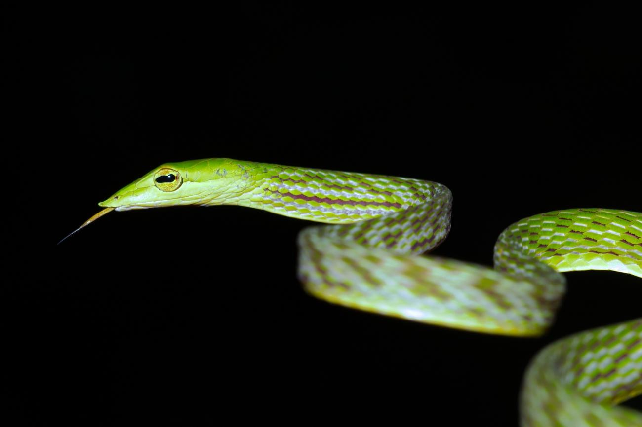Reptiles (Reptilia)