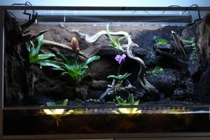 Vivarium, Aquarium, & Terrariums